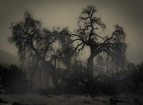 December - Wych Elm